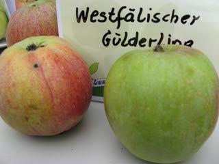 Apfel Westfälischer Gülderling Foto Brandt