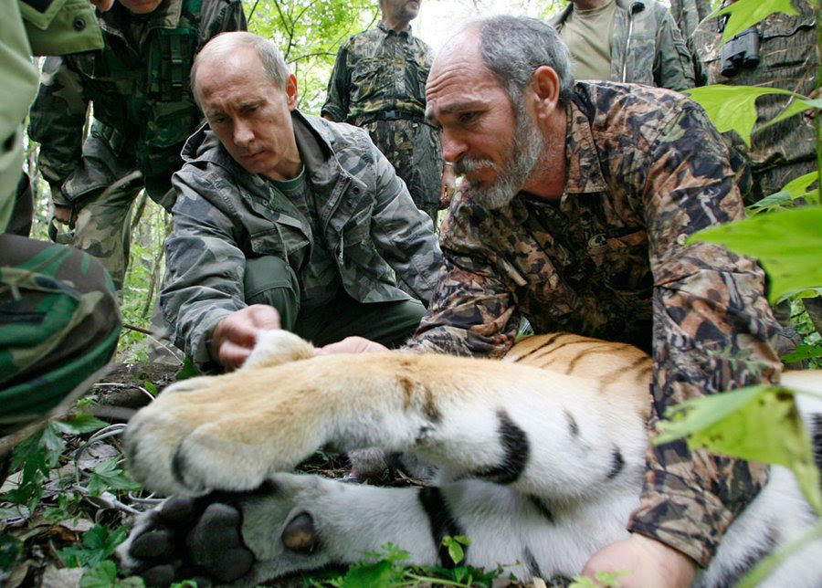 Vladimir Putin holds a five-year Tiger head as scientists put on the animal collar with a satellite beacon.  Far Ussuri Nature Reserve, 31 August 2008.