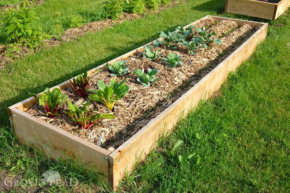 buildingraisedbeds_garden