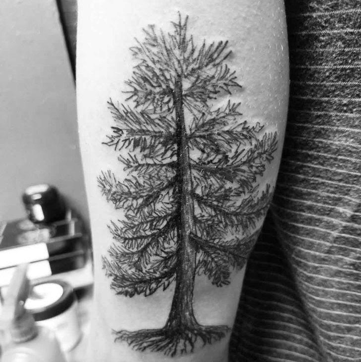 Pine Tree Tattoo Best Tattoo Ideas Gallery