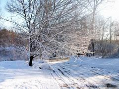 Snow_22009
