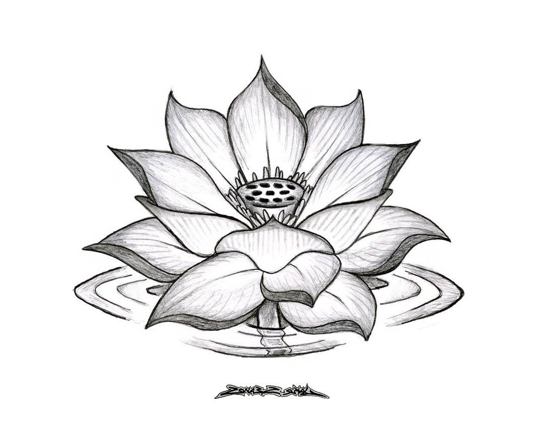 Lotus Flower Drawing Tumblr Wallpapers Gallery