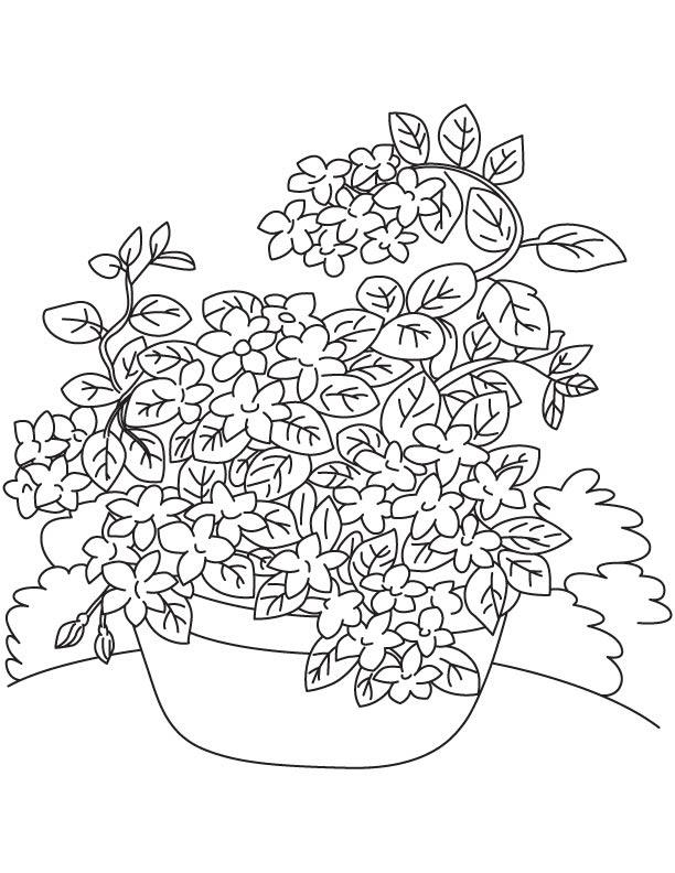 Jasmine Vine Coloring Page Download Free Jasmine Vine Coloring Page For Kids Best Coloring Pages