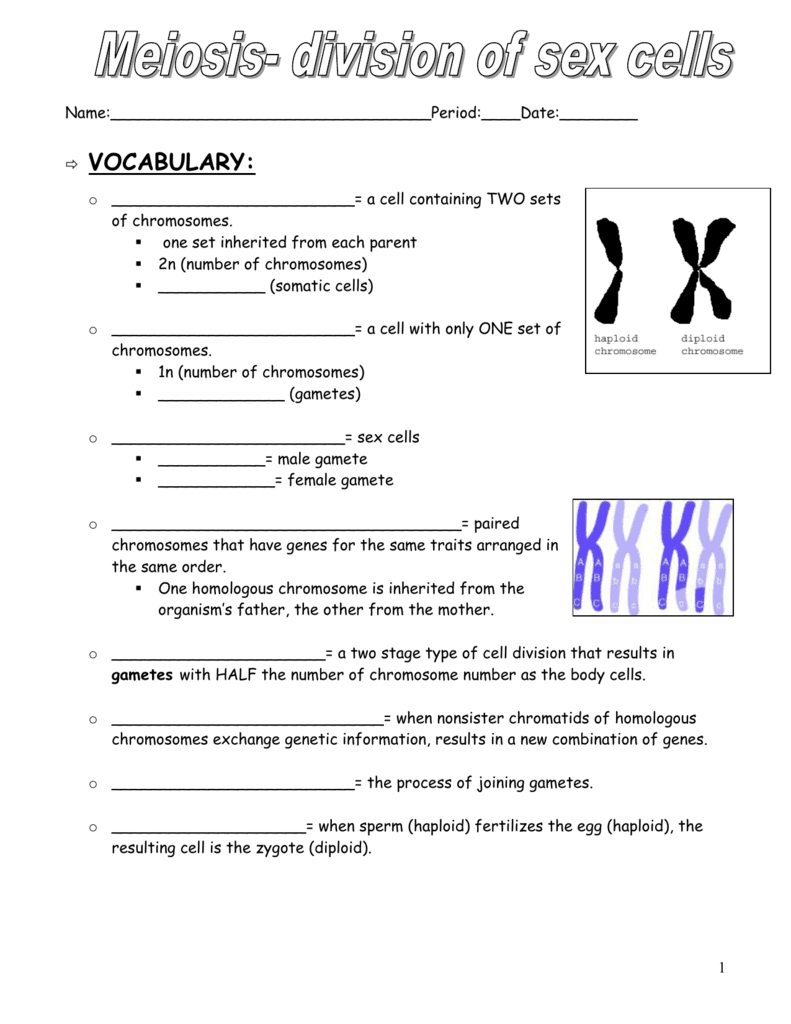 28 102 The Process Of Cell Division Worksheet Answer Key ...