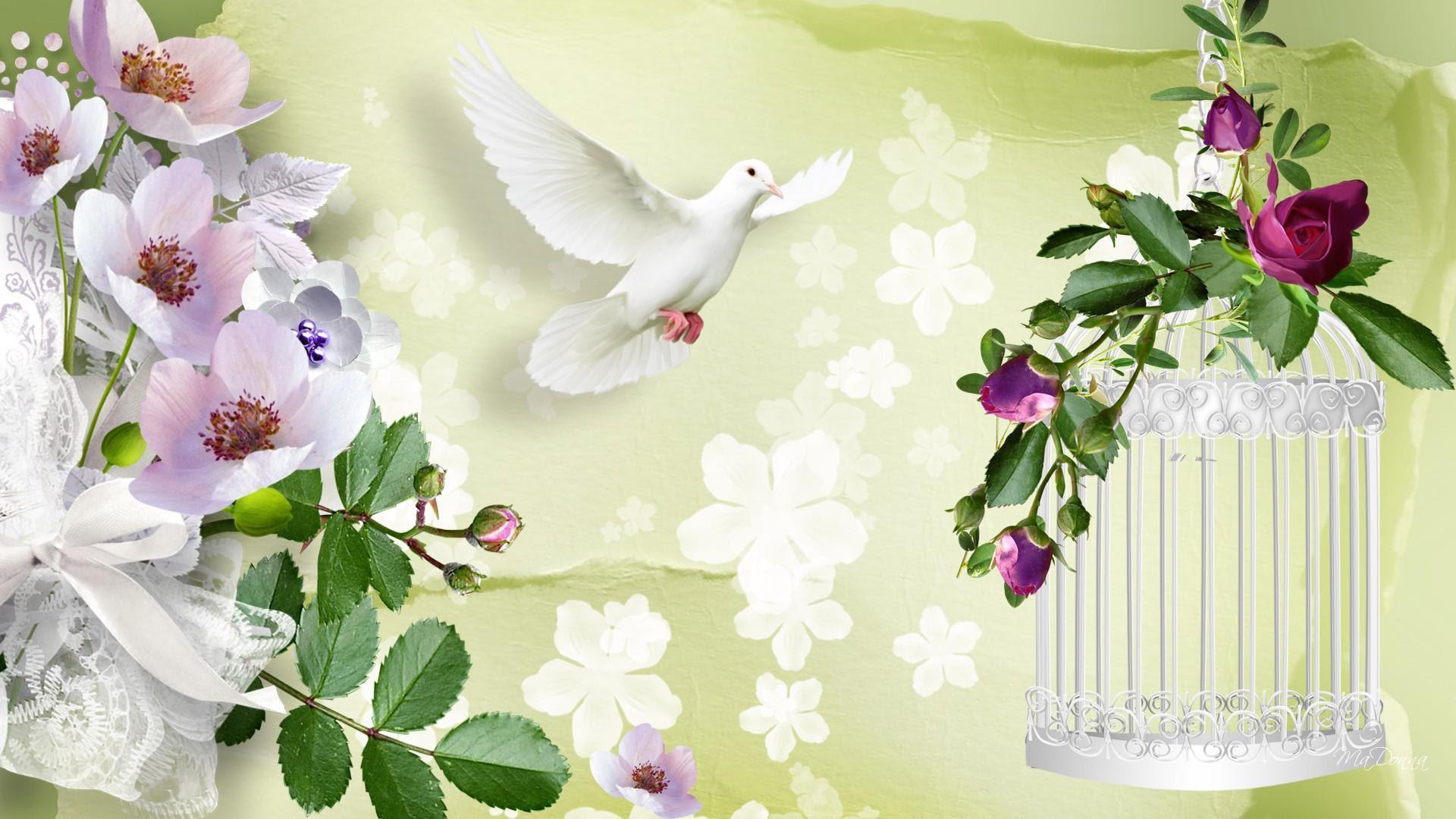 Resultado de imagen para wallpapers de paloma