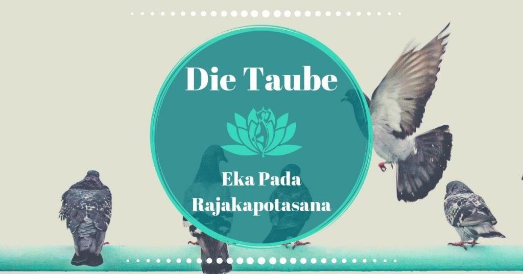 Was ist Yoga: Yoga Taube ~~ Eka Pada Rajakapotasana