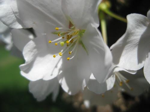 2010-04-02-IMG_6925