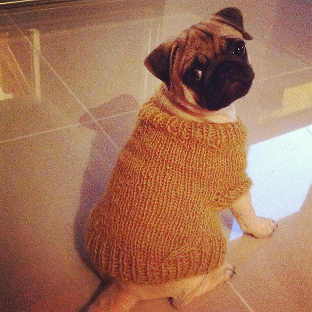 http://www.ravelry.com/projects/Hannicraft/pug-dog-sweater