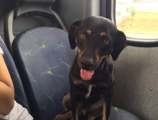 http://imguol.com/c/noticias/6c/2016/03/24/23mar2016---cachorro-pega-carona-em-onibus-de-sorocaba-sp-e-surpreende-passageiros-1458857989644_615x470.jpg