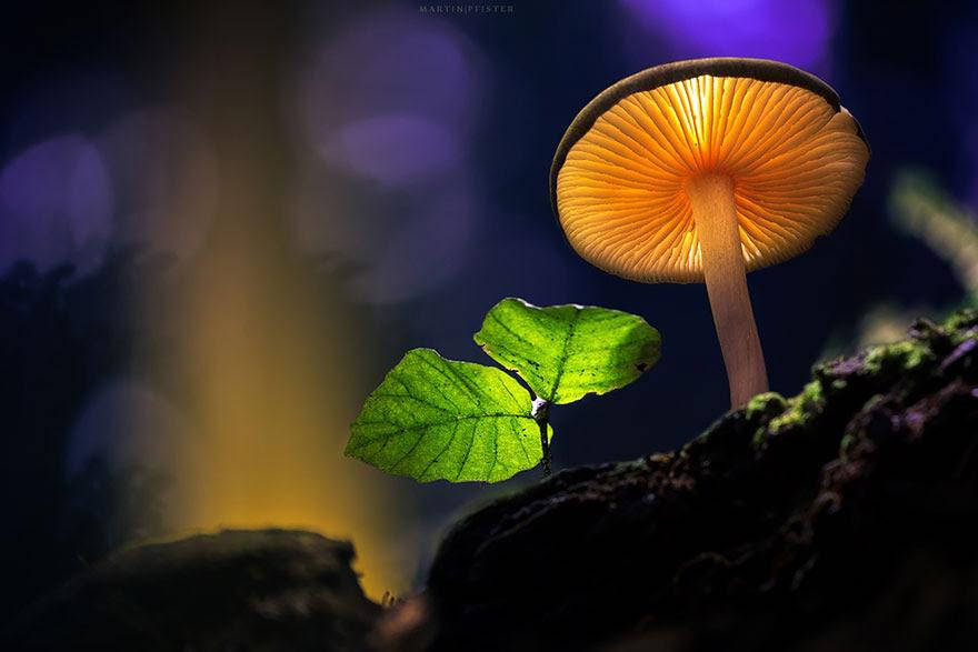 mushrooms-martin-pfister-5