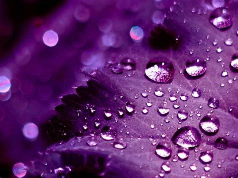 wallpapers  purple wallpapers