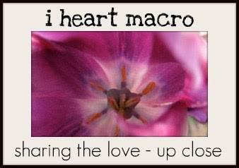 http://www.shinethedivinecreativityisaspiritualpractice.com/2013/12/i-heart-macro-week-33.html