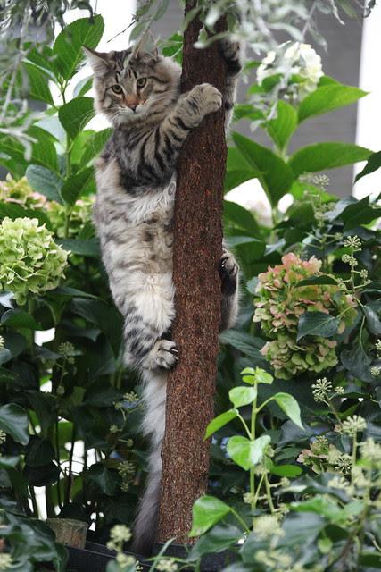 cat or Koala ? ;-)