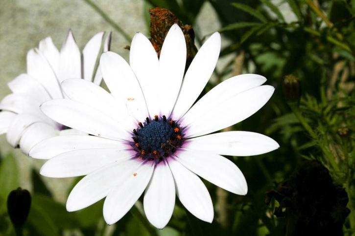 ورود بيضاء جميلة , زهور بيضاء