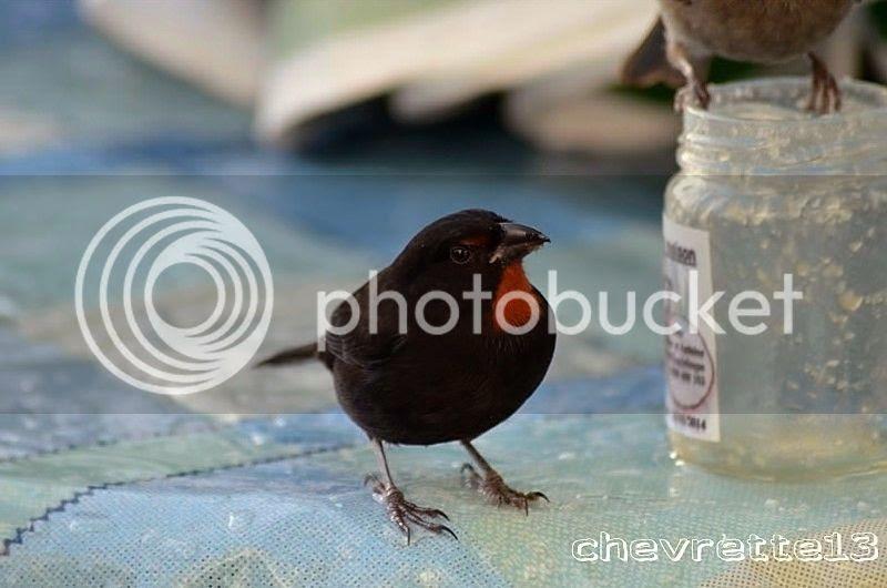 http://i1252.photobucket.com/albums/hh578/chevrette13/Guadeloupe/_DSC0039Copier_zps28499b16.jpg