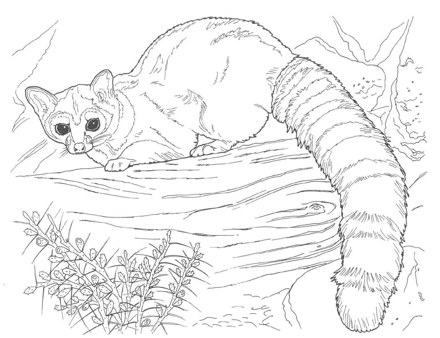 80 Top Free Coloring Pages Of Nocturnal Animals , Free HD Download