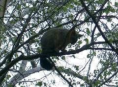 Floriade resident possum