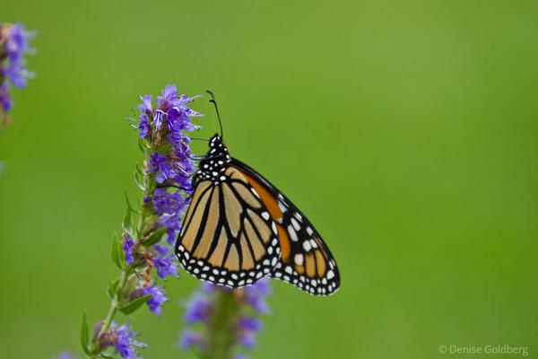 butterfly standing still