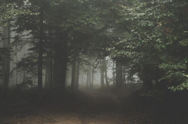 The Importance of Trail Cameras When Hiking or Exploring the Woods