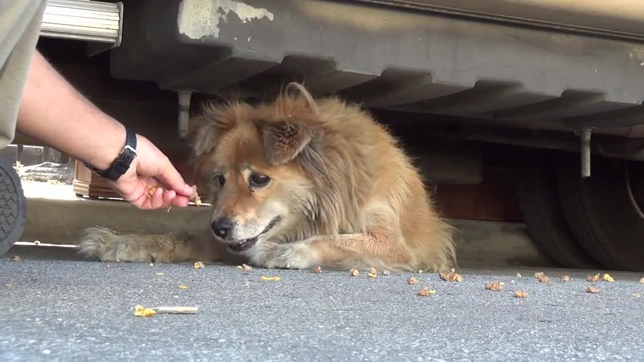 Abandoned Dog Rescued After Spotted On Google Maps