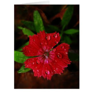 Red Dianthus With Raindrops Big Thank You Card