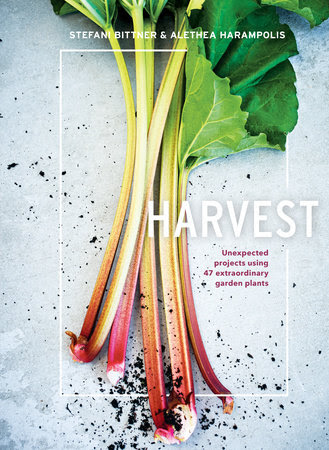 Harvest by Stefani Bittner and Alethea Harampolis