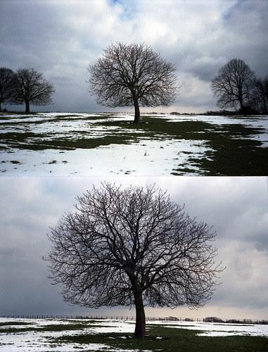 winter horse chestnut by pho-Tony