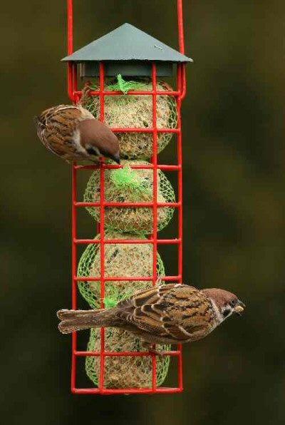 kuş besleyici