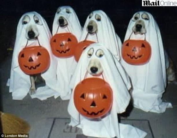 Resultado de imagem para cachorros fantasiados de halloween