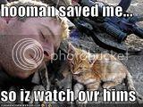 KittenWatchesSoldier-1.jpg Watch over the Fireman Kitten image by voiceomt2002