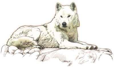 狼オオカミイラスト素材見本kmsys戌年賀状イラスト素材集