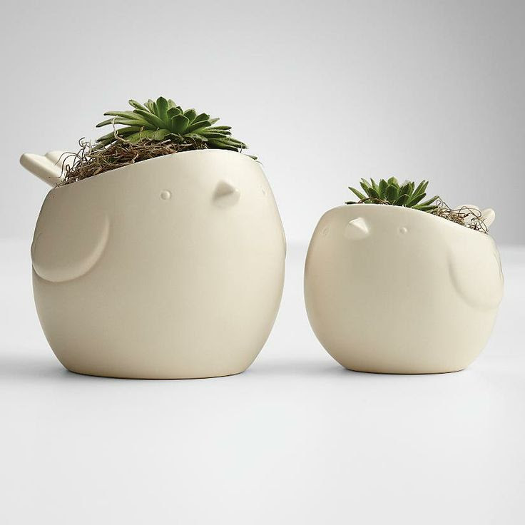 Hen and Chick Plant Pots