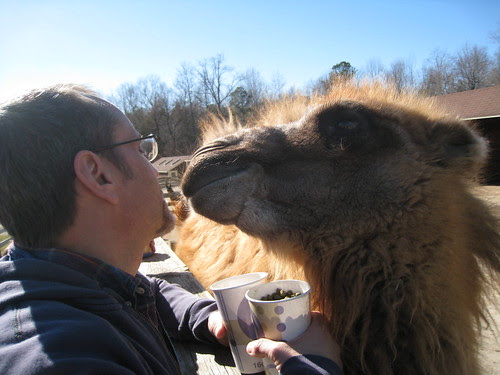 Camel smooch (03)