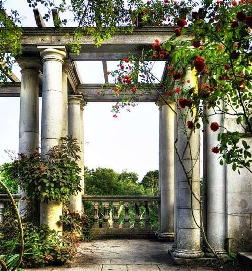 Pergola and columns with climbing roses and vines ~ Heavenly