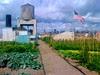Brooklyn Granje huerto urbano en las alturas de la gran manzana