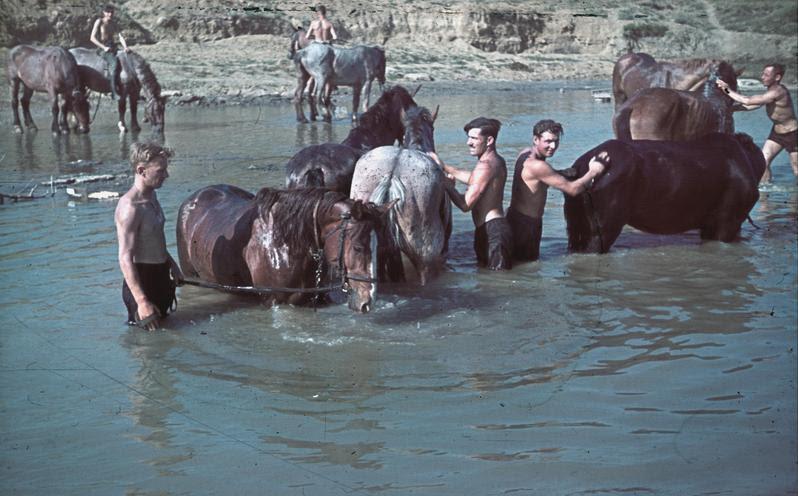 File:Bundesarchiv N 1603 Bild-112, Russland, Krim, Pferdewäsche.jpg