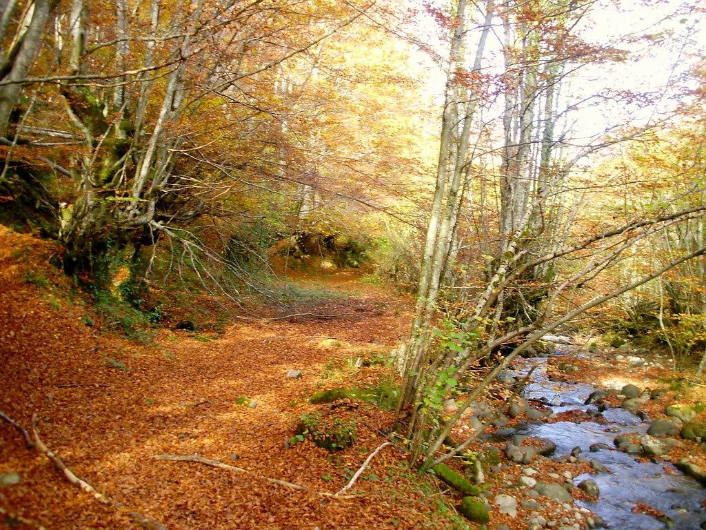 Bosque de Lindes 018