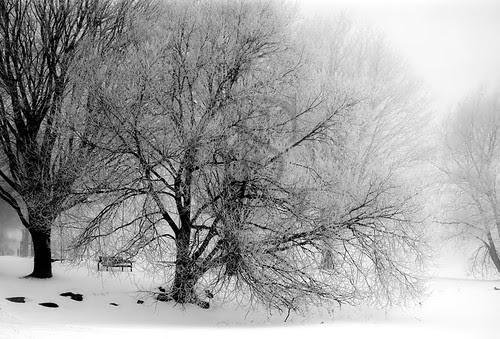 Orillia Waterfront - Winter Park 4