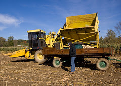 Dumping Some Field Corn