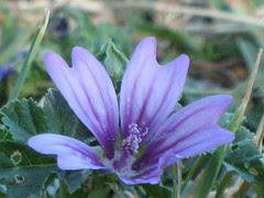 fiorellino, unicità, perfezione, Bellezza, senso