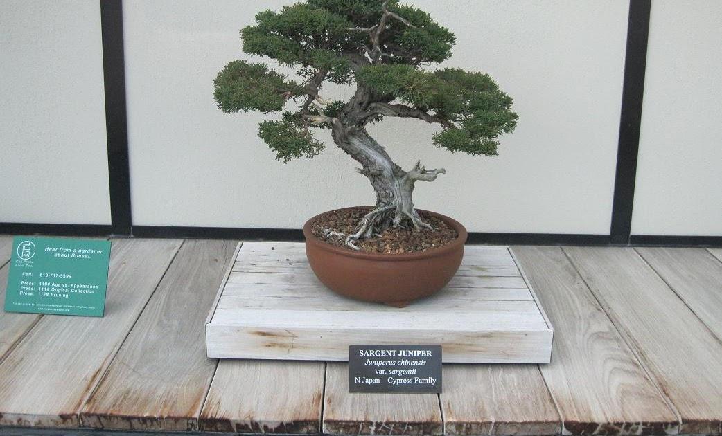 Bonsai Tree 19 Amazing Karate Kid Bonsai Tree Patch Ideas