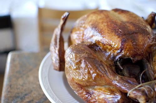 beautiful turkey