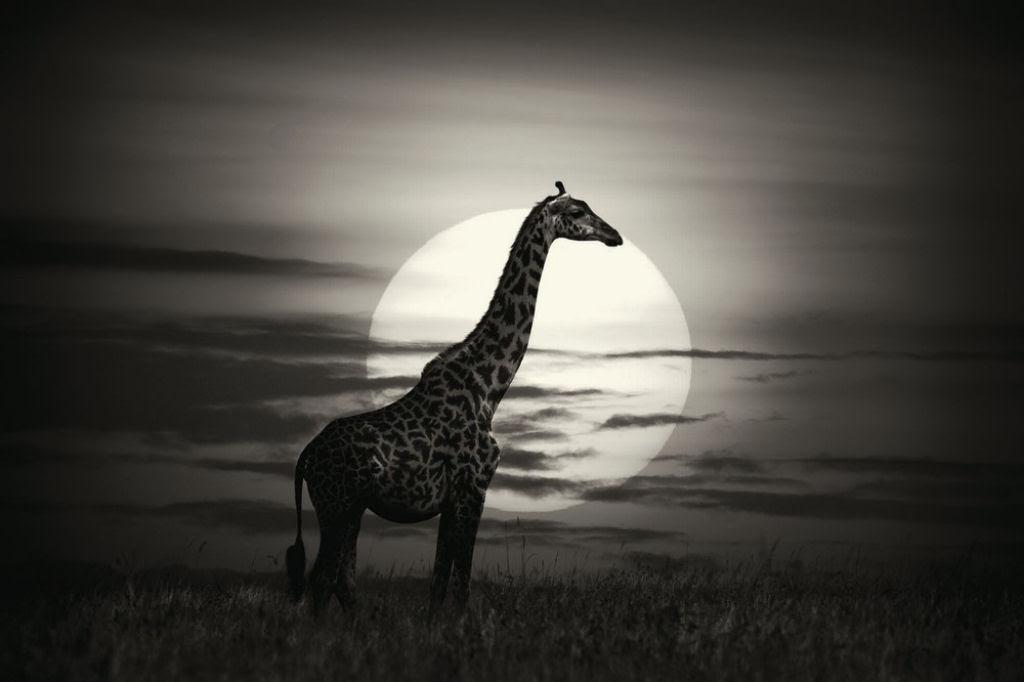 O lado colorido da África selvagem por Alex Bernasconi 10
