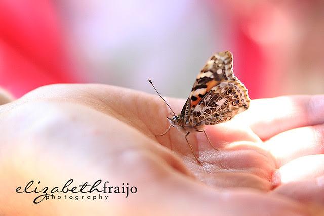 Butterflies02W