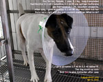 Effect of ketamine after Atropine is given as limbs were rigid. Fox terrier spay. toapayohvets  singapore