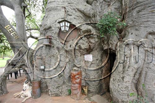 Bar Baobab