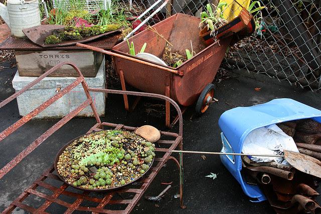23_dish_gardening