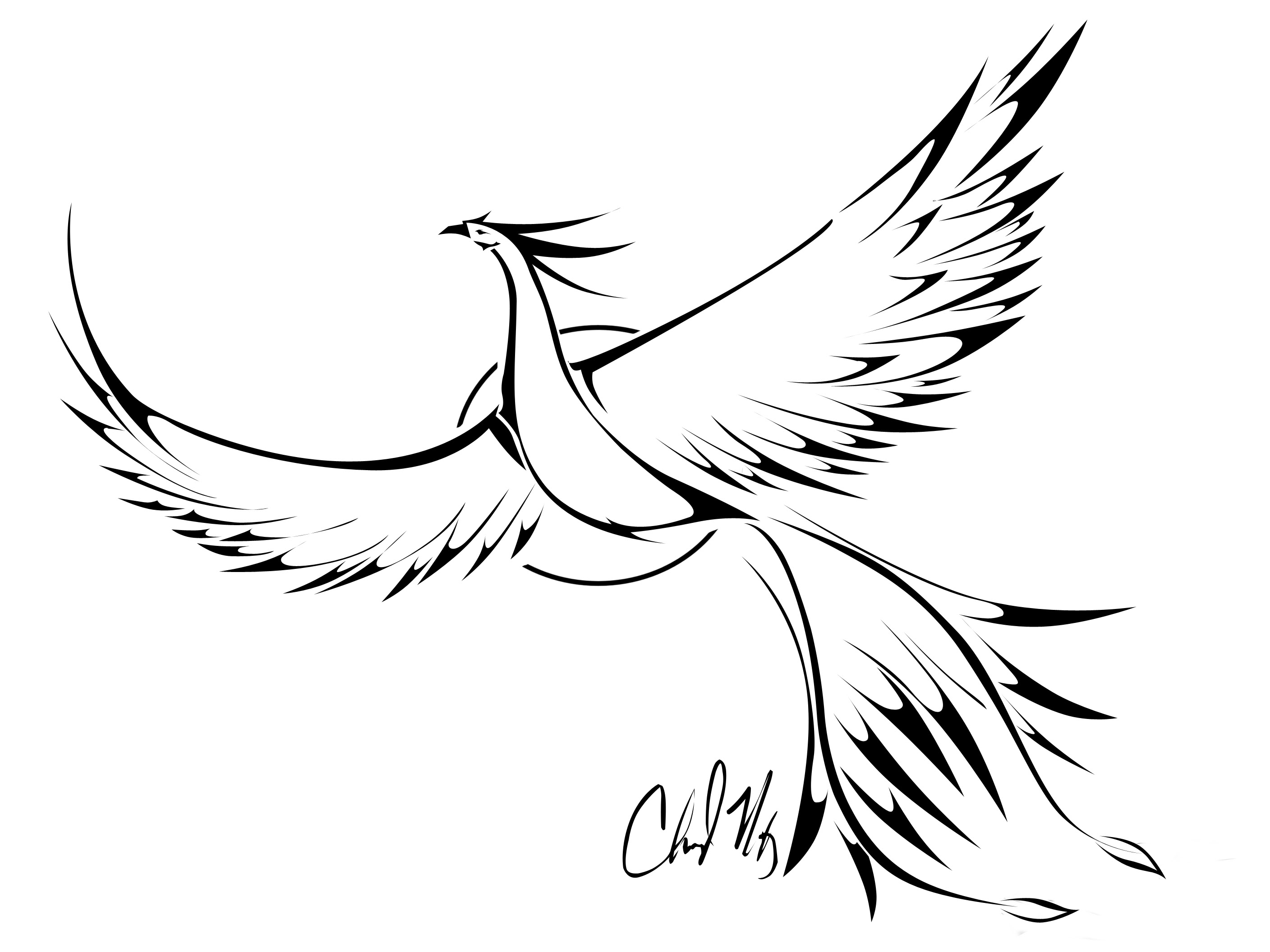 Phoenix Line Drawing At Getdrawingscom Free For Personal Use