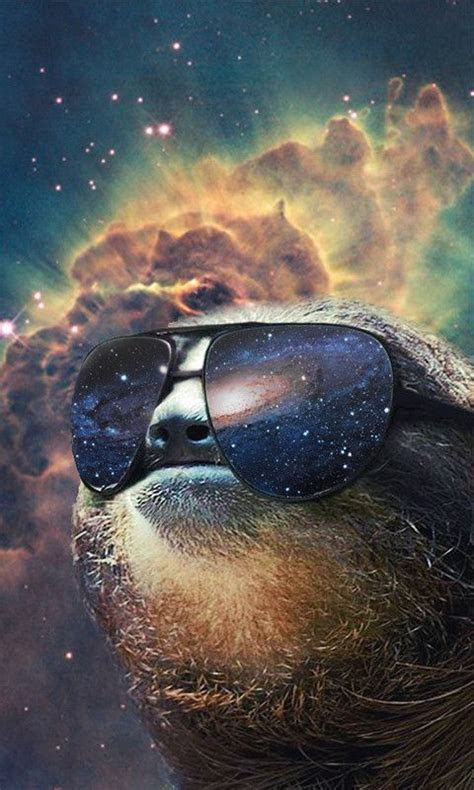 sloth phone background funny finds pinterest sloths