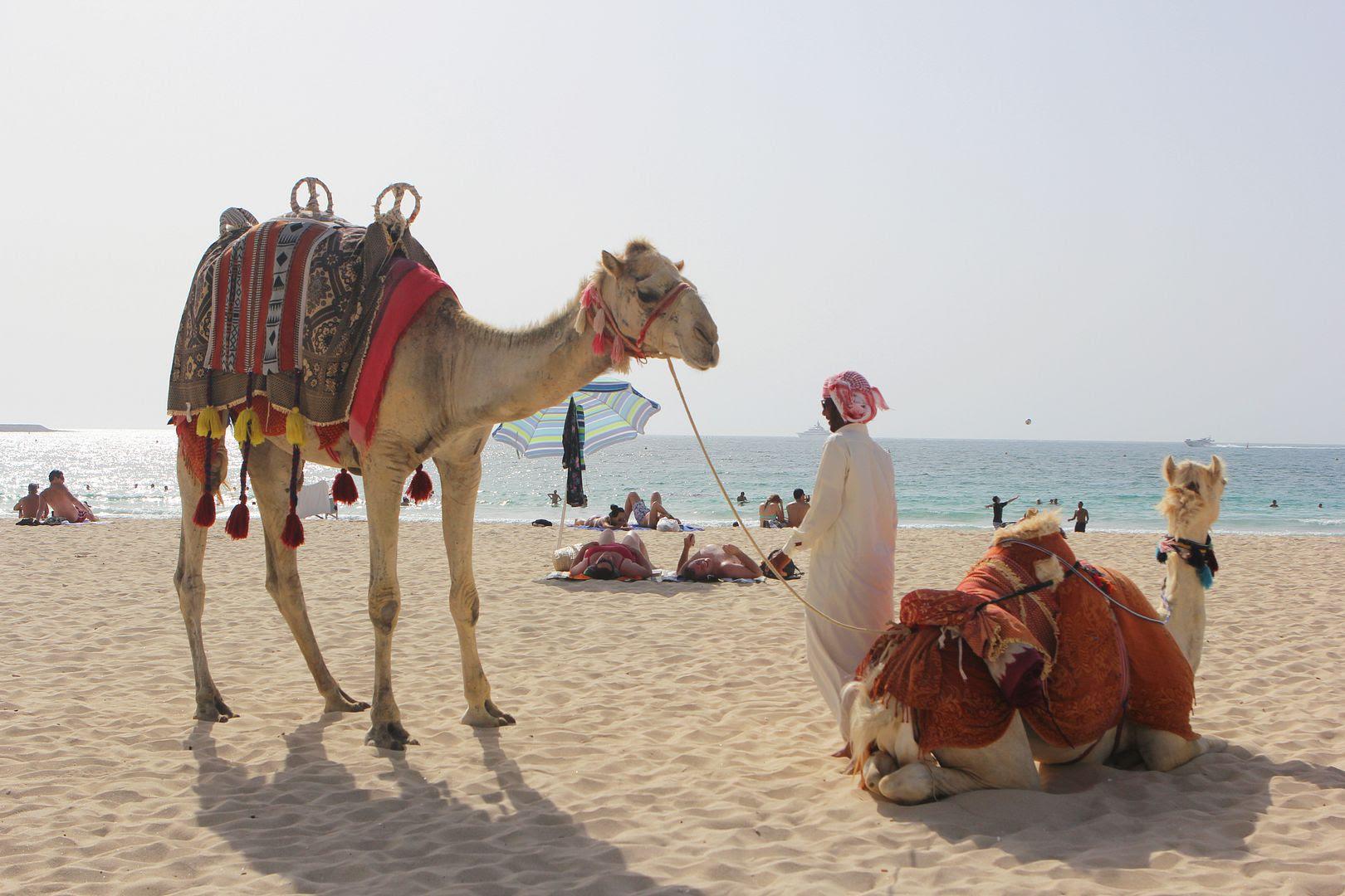 photo camel-dubai-chanelcruisedubai-jmb-beckerman.jpg